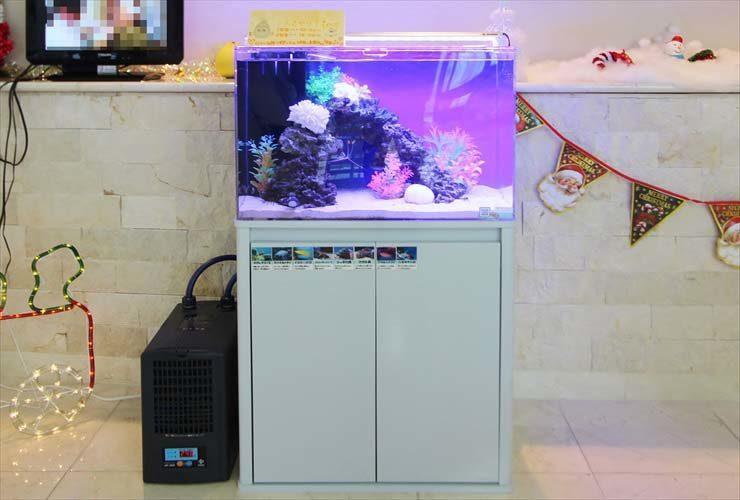 練馬区 介護付有料老人ホーム 60cm海水魚水槽 レンタル・メンテナンス事例 水槽画像1