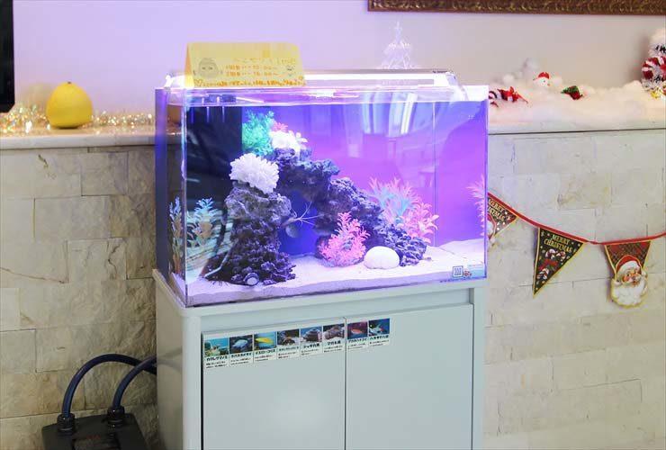 練馬区 介護付有料老人ホーム 60cm海水魚水槽 レンタル・メンテナンス事例 水槽画像2