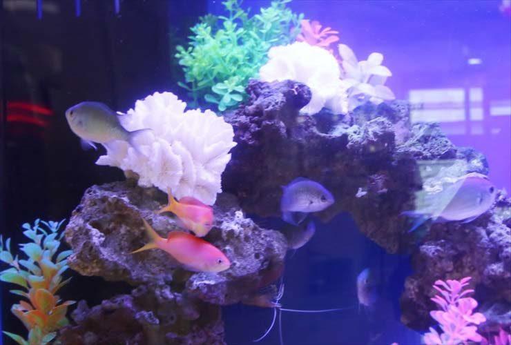 練馬区 介護付有料老人ホーム 60cm海水魚水槽 レンタル・メンテナンス事例 水槽画像3