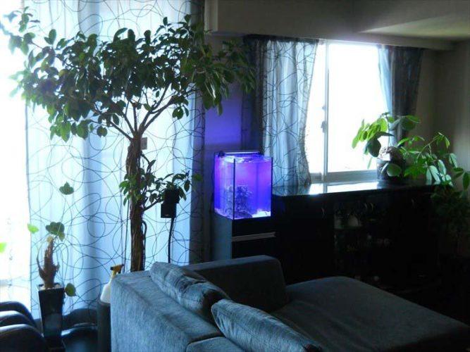都内 個人宅様  30cm海水魚水槽  設置事例 メイン画像