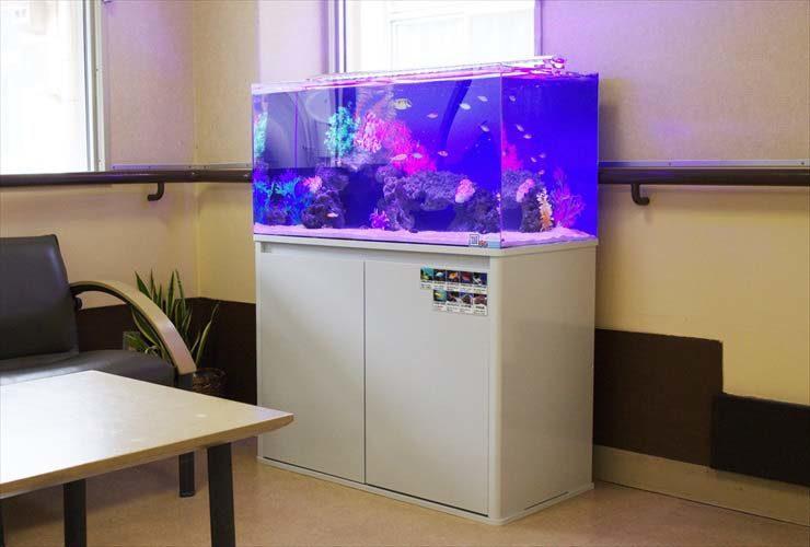 福祉施設内に設置 90cm水槽 海水アクアリウ事例