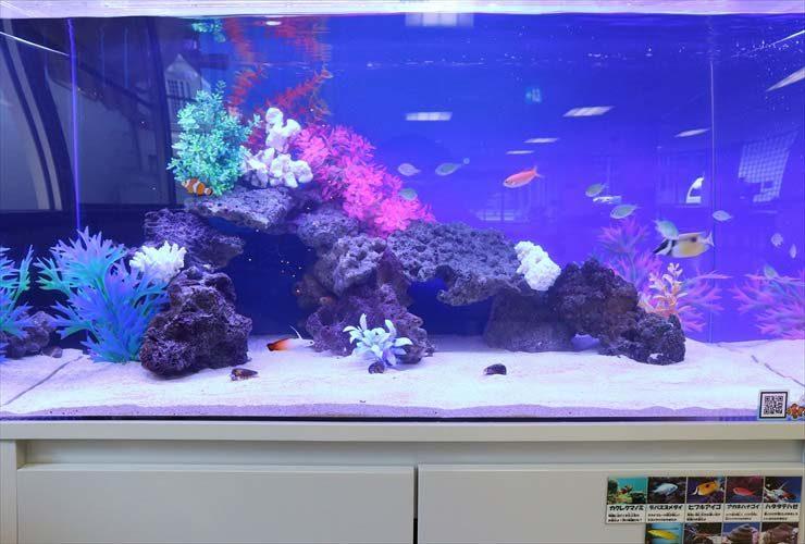 福祉施設内に設置 90cm水槽 海水アクアリウ事例 水槽画像2