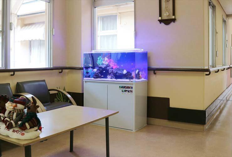 福祉施設内に設置 90cm水槽 海水アクアリウ事例 水槽画像3