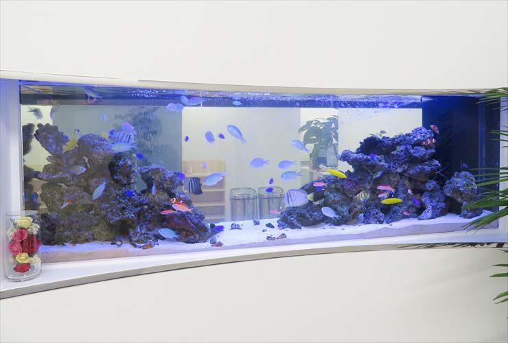 オフィスに設置 両面仕様水槽 大型180cm 海水アクアリウム事例 水槽画像1