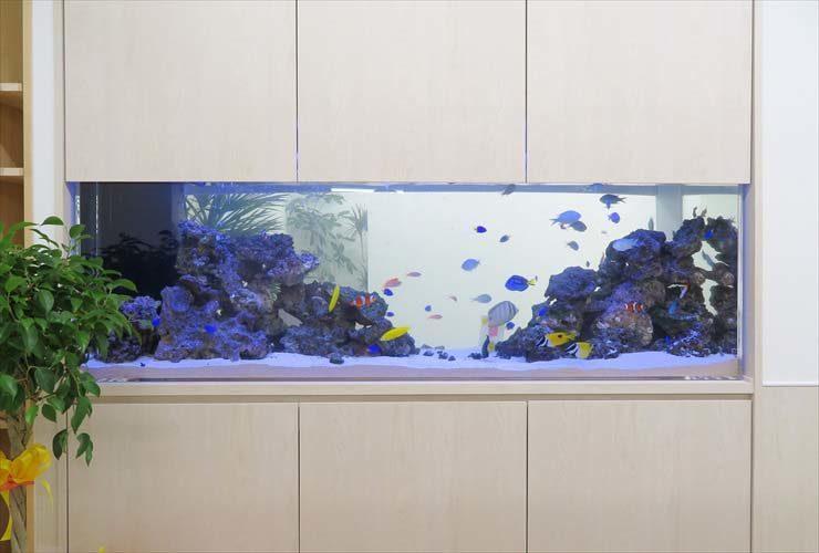 オフィスに設置 両面仕様水槽 大型180cm 海水アクアリウム事例 水槽画像3