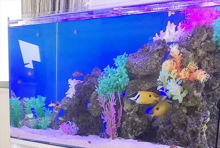 自宅のリビングに設置 90cm海水魚水槽 アクアリウム導入事例 水槽画像2