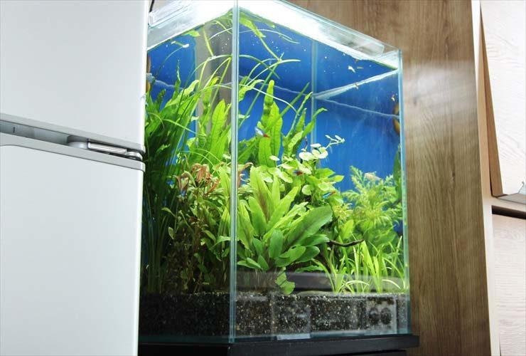 都内 個人宅に設置 水草レイアウト水槽 お試し導入事例 メイン画像