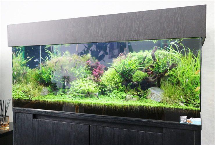 さいたま市 オフィス内に設置 水草育成 120cm淡水アクアリウム事例 メイン画像