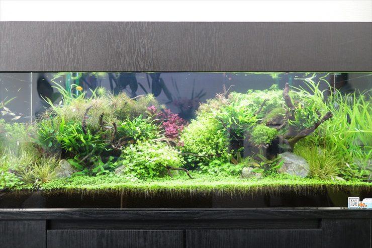 さいたま市 オフィス内に設置 水草育成 120cm淡水アクアリウム事例 水槽画像2