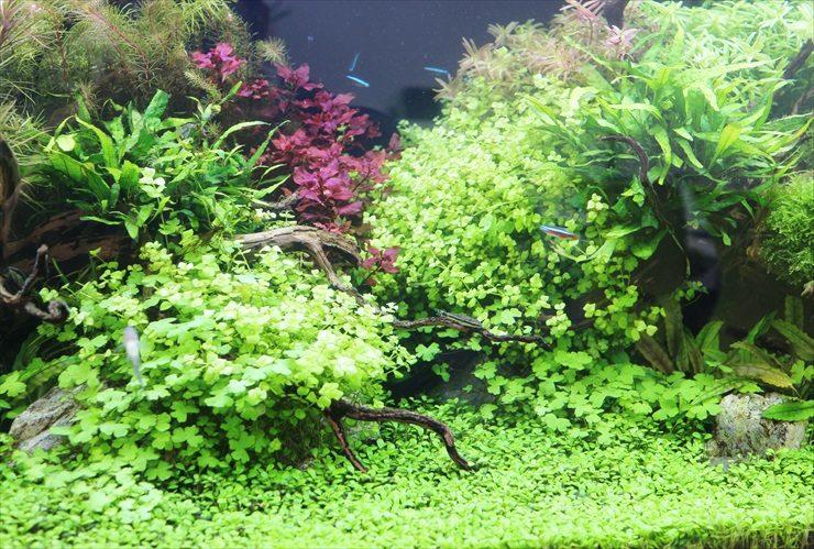 さいたま市 オフィス内に設置 水草育成 120cm淡水アクアリウム事例 水槽画像3