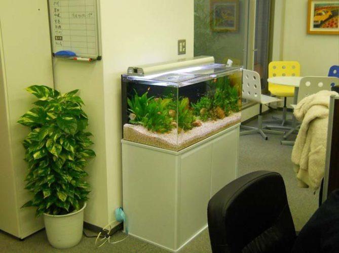 東京都中央区 企業様  90cm淡水魚水槽  設置事例 メイン画像