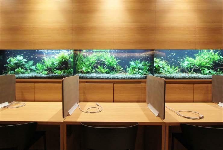 千代田区 オフィス 6台設置 大型淡水アクアリウム事例 メイン画像