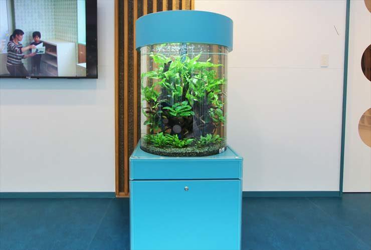 世田谷区 保育園 エントランス 円柱アクアリウム 設置事例 水槽画像3