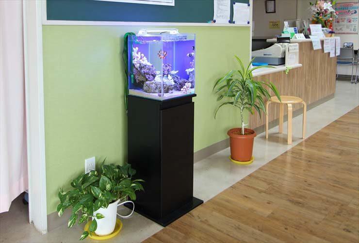 埼玉県 草加市 整形外科 30cm海水魚水槽 設置事例 メイン画像