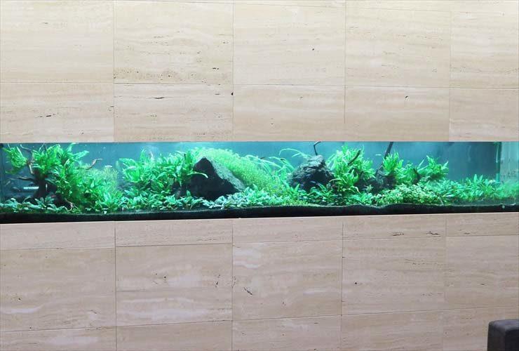 クリニック 待合室 大型淡水魚水槽 メンテナンス事例 水槽画像3