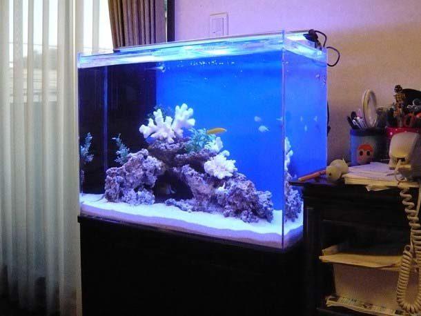 都内 個人宅様  60cm海水魚水槽  設置事例 メイン画像
