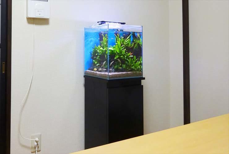 自宅のリビングに設置 30cm淡水魚水槽 お試し無料設置事例 メイン画像