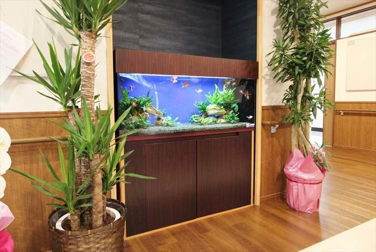 老人ホームに設置 淡水アクアリウム 更紗琉金(金魚)水槽事例 メイン画像
