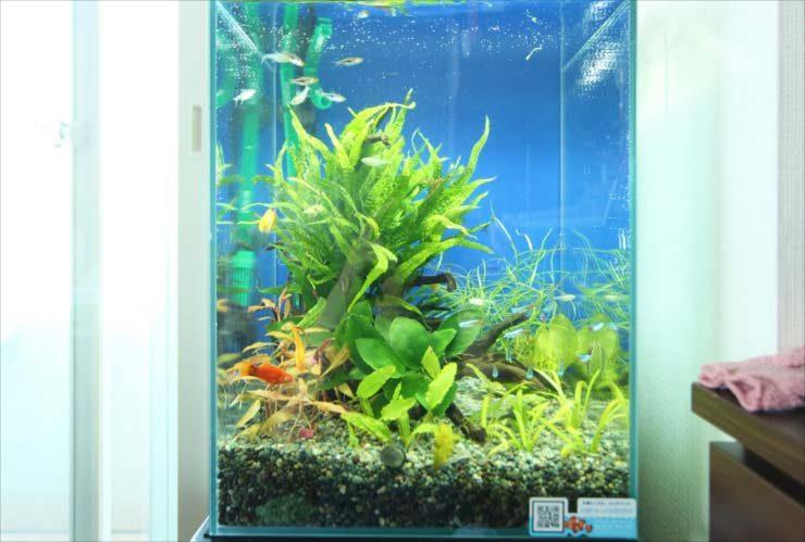 立川市 個人宅のリビング 30cm淡水魚水槽 お試し設置事例 メイン画像