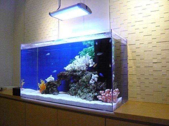 東京都世田谷区 病院様  90cm海水魚水槽  設置事例 メイン画像