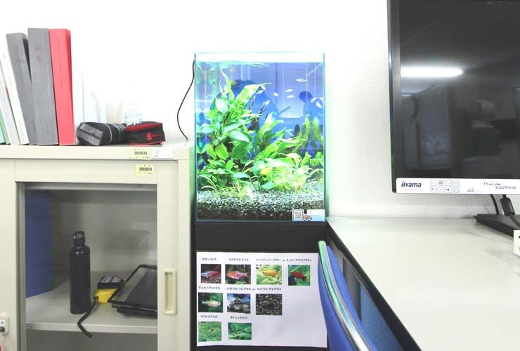 江東区 オフィス事務所 30cm淡水魚水槽 設置事例