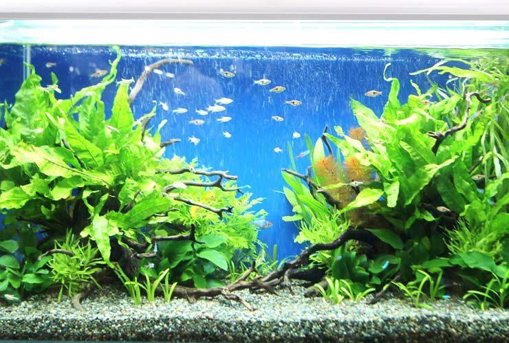 東京ビックサイト 短期イベント 90cm淡水魚水槽設置事例 水槽画像2