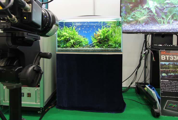 東京ビックサイト 短期イベント 90cm淡水魚水槽設置事例 水槽画像3