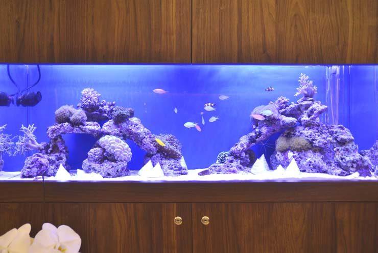 横浜 美容クリニック 待合室 120cm海水魚水槽 設置事例 水槽画像2