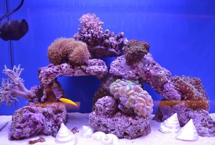 横浜 美容クリニック 待合室 120cm海水魚水槽 設置事例 水槽画像3