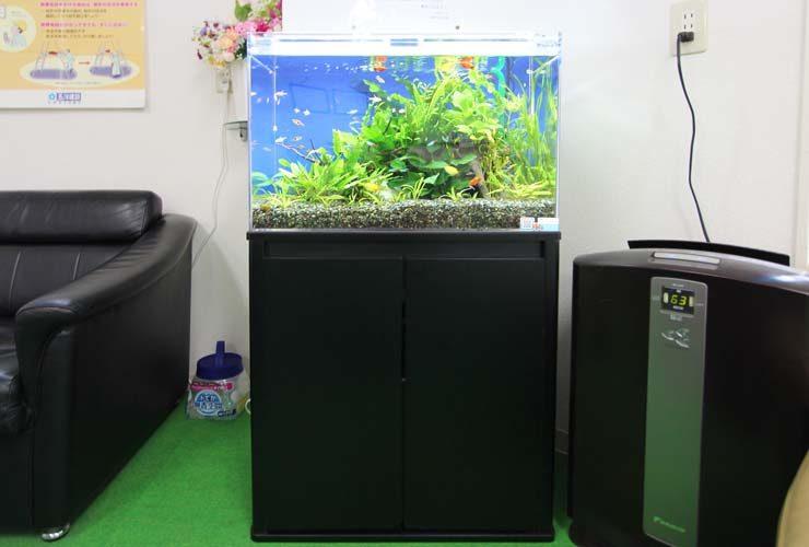 北区 オフィス事務所 60cm淡水魚水槽 設置事例 メイン画像