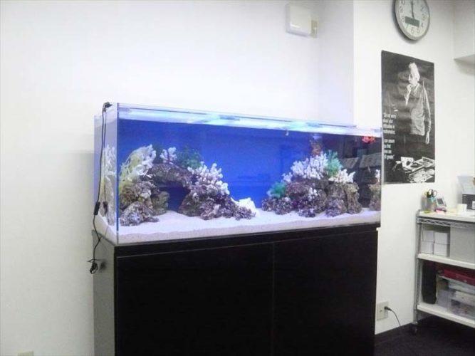 埼玉県川口市 企業様  150cm海水魚水槽  設置事例 メイン画像