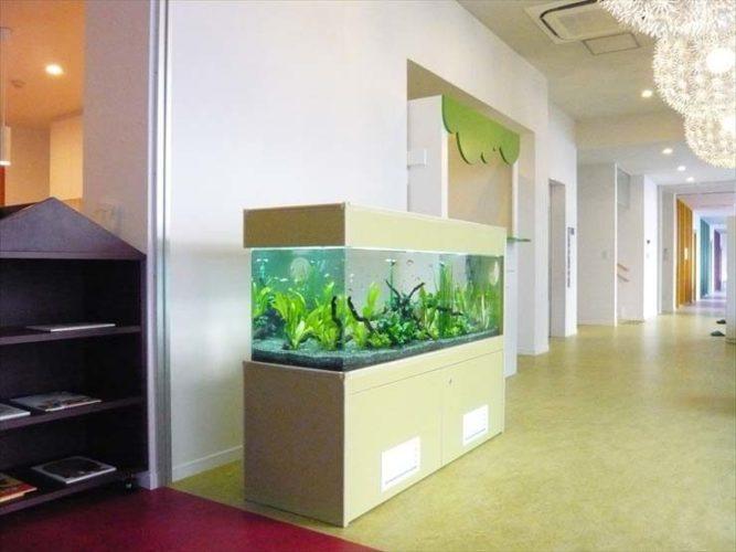 東京都世田谷区 保育園様  150cm淡水魚水槽  設置事例 メイン画像