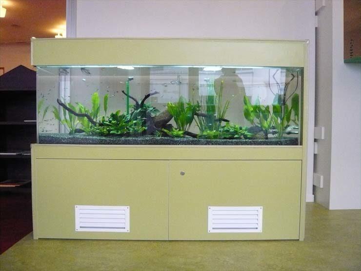 東京都世田谷区 保育園様  150cm淡水魚水槽  設置事例 水槽画像3