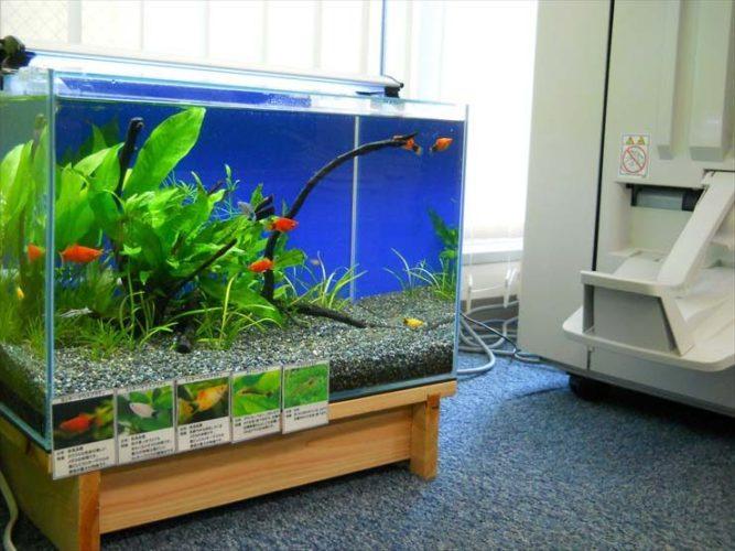 港区 企業様  45cm淡水魚水槽  設置事例