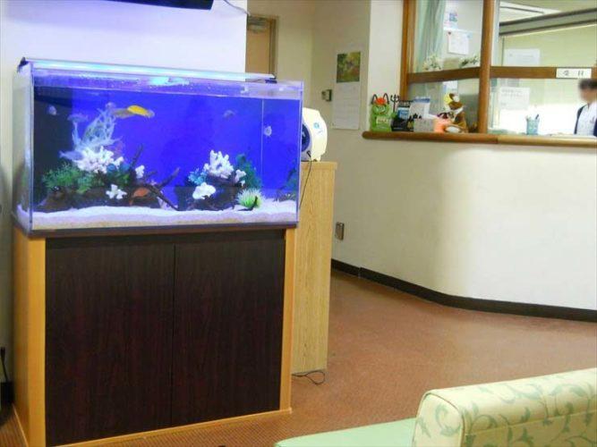 東京都羽村市 病院様  90cm淡水魚水槽  設置事例 メイン画像