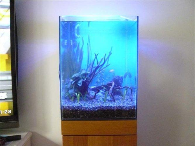 神奈川県横浜市 個人宅様  30cm淡水魚水槽  設置事例 メイン画像