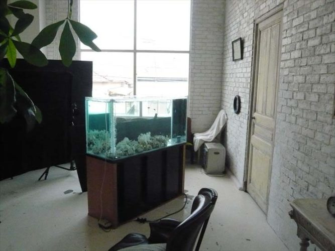 都内 撮影スタジオ様  120cm淡水魚水槽  設置事例 メイン画像