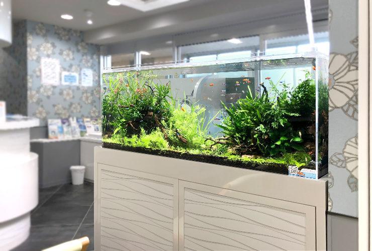 横浜 眼科クリニックの待合室 120cm淡水魚水槽 設置事例 その後 メイン画像
