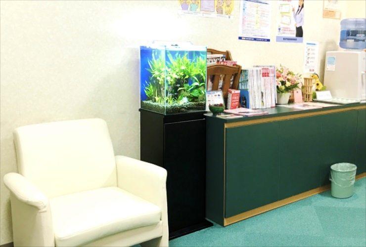 心療内科クリニック 待合室 30m淡水魚水槽 設置事例 水槽画像2