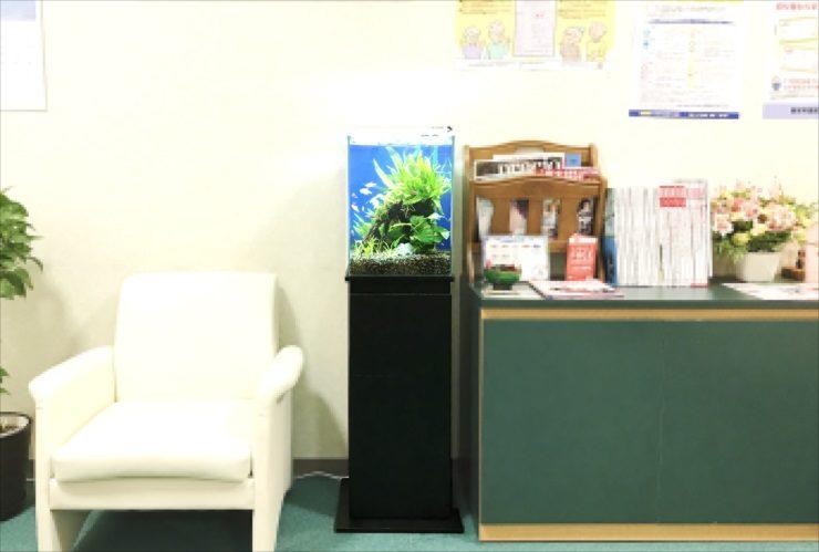 心療内科クリニック 待合室 30m淡水魚水槽 設置事例 水槽画像3
