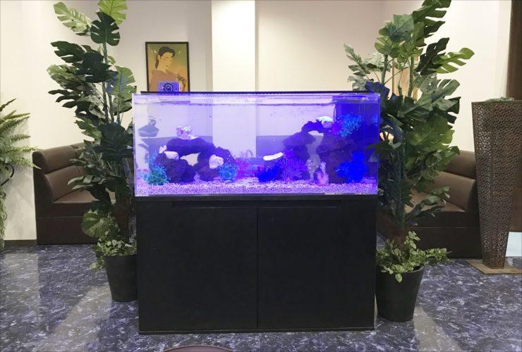 クラブ ラウンジ 120cmシクリッド水槽 設置事例 水槽画像2