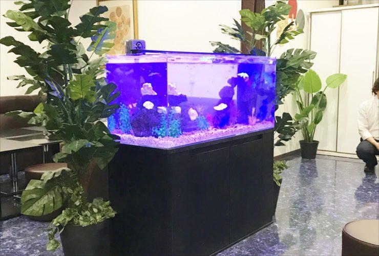 クラブ ラウンジ 120cmシクリッド水槽 設置事例 水槽画像3