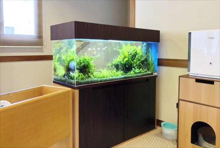 神奈川県 湯河原町 老人ホーム 120cm淡水魚水槽 設置事例 その後 メイン画像