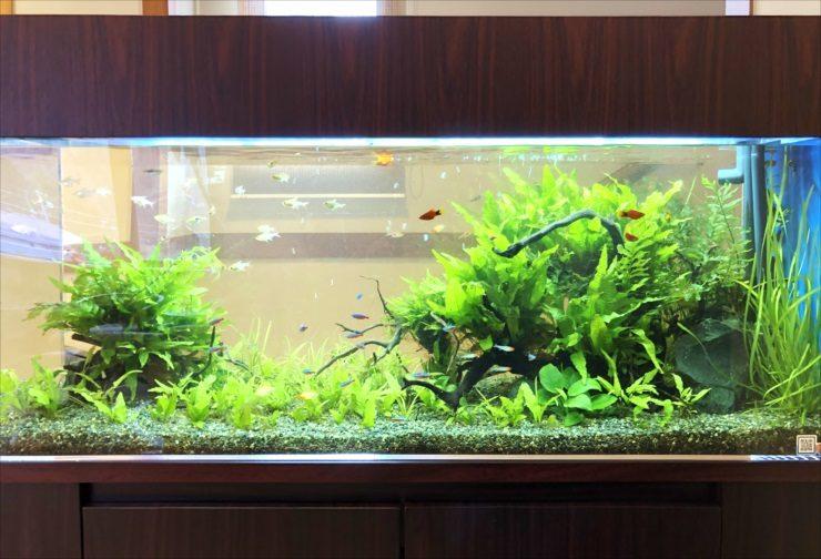神奈川県 湯河原町 老人ホーム 120cm淡水魚水槽 設置事例 その後 水槽画像2