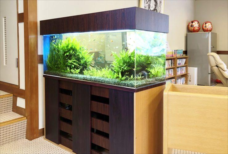 神奈川県 湯河原町 老人ホーム 120cm淡水魚水槽 設置事例 その後 水槽画像3