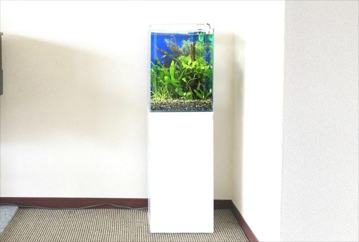 大阪市 個人宅リビング 30cm淡水魚水槽 設置・メンテナンス事例