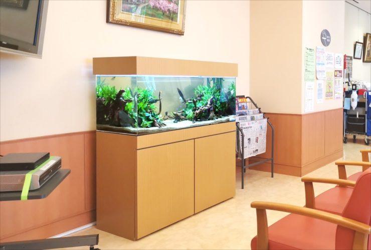 愛知県 病院の待合室 透明感のある120cm淡水魚水槽 設置事例 メイン画像