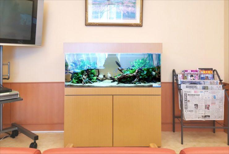 愛知県 病院の待合室 透明感のある120cm淡水魚水槽 設置事例 水槽画像3