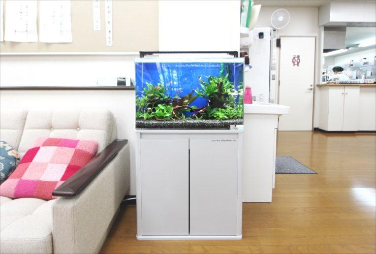吉祥寺 高齢者センター 60cm淡水魚水槽 設置事例