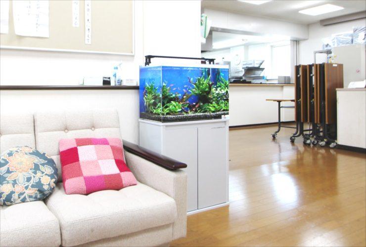 吉祥寺 高齢者センター 60cm淡水魚水槽 設置事例 水槽画像2